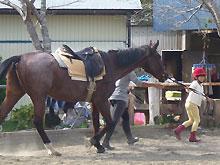 伊豆下田祭 2009