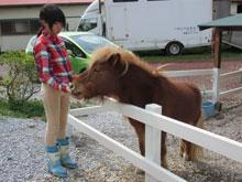 にんじんで馬と仲良くなろう!